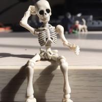 玩物尚志 骷髅人模型 骨头先生