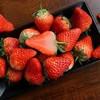 马岗久久  丹东99草莓 3斤精选大果