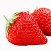 玖玖农场 红颜奶油草莓 特级大果 1.5kg