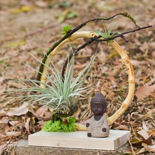 红豆(Hodo)棉花糖空气凤梨 带木托新奇微景观带佛像绿植盆栽 带盆栽好