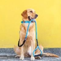 Touchdog 它它 防爆冲弹力狗狗牵引绳