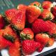 京东PLUS会员:若亦果业 丹东九九草莓 3斤 家庭实惠装 *3件 156元包邮(需用券)