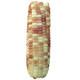 傣糯玉米 西双版纳甜糯玉米 试吃2根装 1.9元包邮(需用券)