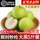 闵家山 台湾牛奶大青枣 带箱5斤大果 顺丰包邮 +凑单品 17.8元(需用券)
