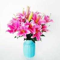 移动专享:普雷特 粉色百合 鲜花 10朵 送保鲜剂