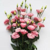 移动专享:普雷特 洋桔梗 鲜花 20朵 颜色随机
