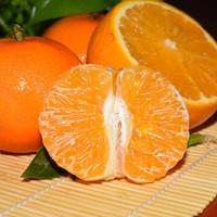 亿熙 现摘广西武鸣 沃柑 贵妃柑 5斤 皇帝贡品柑橘 蜜橘子桔子 京东生鲜(正常发货)
