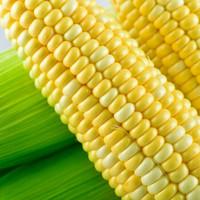 云南农家自种甘甜水果玉米棒净重 9斤 香甜脆嫩现摘现发新鲜生玉米 烧烤食材 京东生鲜蔬菜