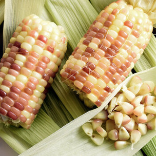 云南香糯小玉米  粘玉米棒  净重2kg以上  约11-13根  单根110-200g  真空礼盒包装