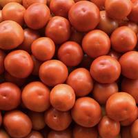 攀枝花 自然熟大西红柿 净重1斤  *5件