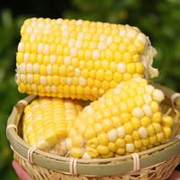云南甜玉米 水果玉米 烧烤食材 净重5斤