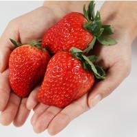 联承 丹东99草莓 精选大果 3斤装