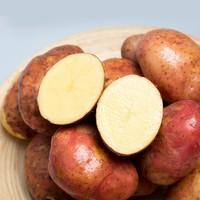 SHANSHIYUAN 善食源 云南红皮土豆 5斤