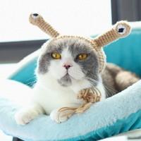 MIXIN 密心 可爱猫咪变装帽子