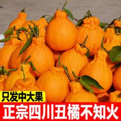 四川丑橘不知火2斤现摘现发新鲜