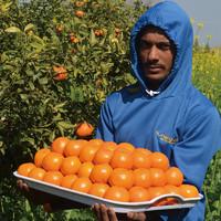 逸知鲜 巴基斯坦进口橘子 金诺柑橘 1kg