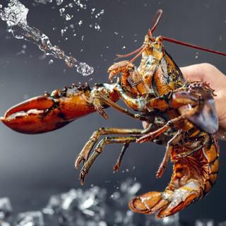 品珍鲜活 加拿大进口 波士顿龙虾  450-550g