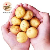 助力湖北:乡告 恩施富硒高山黄心马铃薯 2.5kg