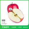 MrAPPLE 红玫瑰Queen苹果 140g*8个