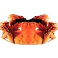 颜氏蟹业 大闸蟹 2kg (4对 母蟹 2.8-3.1+公蟹 3.8-4.1)