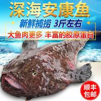 玮世 青岛冷冻安康鱼 1500g 1条 袋装 丑鱼老头鱼鮟鱇鱼海鱼海鲜