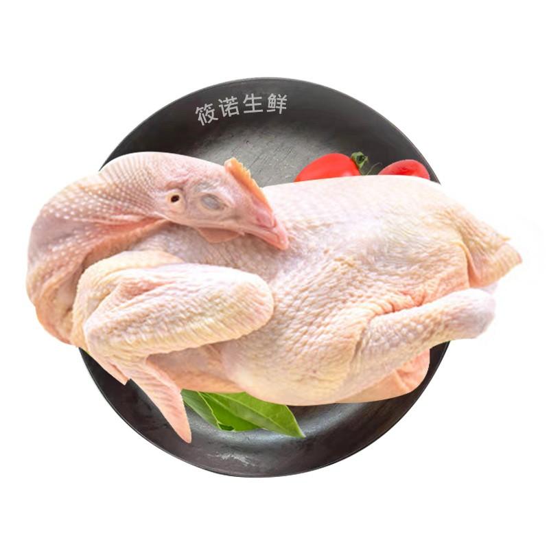筱诺  生鲜三黄童子鸡 新鲜现杀   750g/只