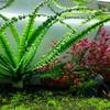 后景水草鱼缸造景活体植物龙鞭水草水下繁殖易养水草大小龙鞭草