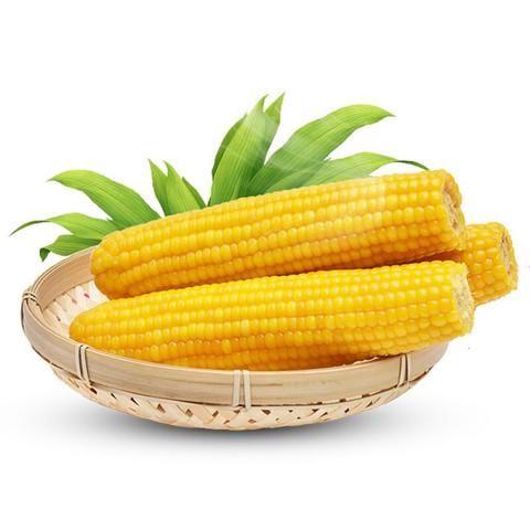禾语鲜  黄糯玉米 200g*8支