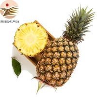 金钻凤梨4.5-5斤(3-4个)新鲜甜蜜蜜凤梨海南热带水果