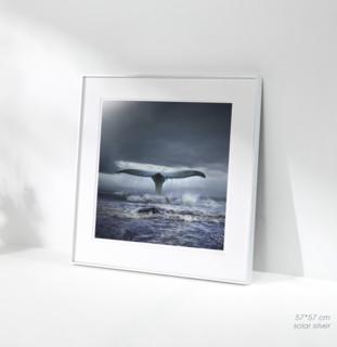 艺术品 《蓝鲸》 Tomasz Zaczeniuk 托马什·扎切纽克 作品