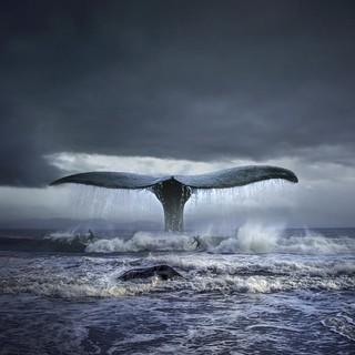 波兰艺术家 托马什·扎切纽克 限量 摄影作品《蓝鲸》限量摄影