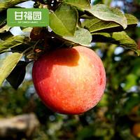 甘福园 苹果水果9斤新鲜当季红富士大丑萍果整箱 4500g