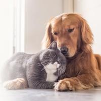 阳光萌宠保宠物医疗险