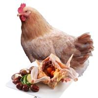 淇翔 老母鸡 1.1kg