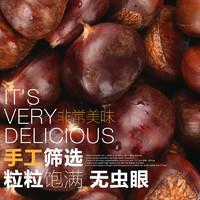 【有机板栗】紫玉 迁西板栗2019年新鲜生栗子 手工挑选3斤装