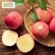 星球果园 高原蜜脆苹果 12枚装