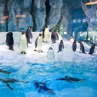 珠海长隆企鹅极地房1晚(含2张海洋王国门票)