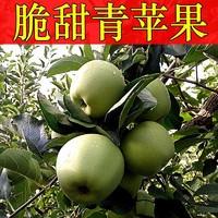移动端:青苹果 新鲜水果酸甜脆孕妇水果 山西青苹果 农家现摘包邮