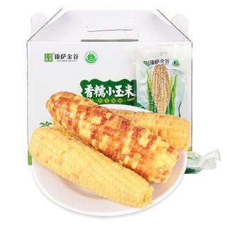 云南香糯小玉米 粘玉米棒  净重2kg以上  约10-13根  单根110-200g  真空礼盒包装 *7件