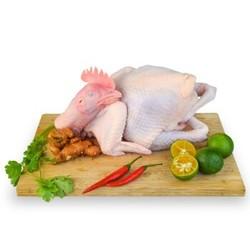 潭牛 海南文昌鸡 散养110天母鸡 1.8斤以上/只 *2件