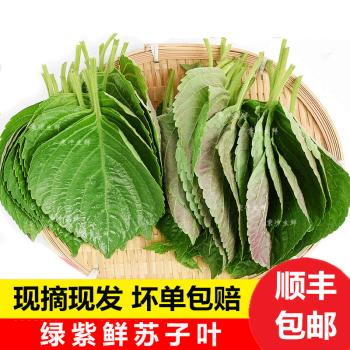 顺丰 新鲜紫苏叶 苏子叶 韩式烤肉叶 250g约90-100片 绿色蔬菜