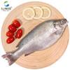 仙泉湖 澳洲宝石鲈鱼三去净膛400~500g简单腌渍(CNAS认证)烧烤食材海鲜水产
