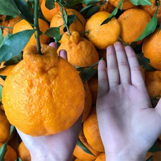 蒲江不知火丑橘 精选橘子钻石果净果8斤  新鲜水果桔子礼盒装