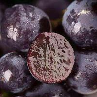 当季蓝莓葡萄现摘无籽葡萄新鲜整箱孕妇水果3斤