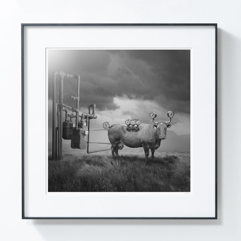 艺术品【PICAPhoto】波兰艺术家托马什·扎切纽克摄影作品 《蒸汽牛》