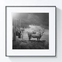 艺术品:【PICAPhoto】波兰艺术家托马什·扎切纽克摄影作品 《蒸汽牛》
