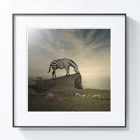 艺术品【PICAPhoto】波兰艺术家托马什·扎切纽克摄影作品《斑马》