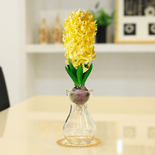 萌肉居 包花色 水培植物 风信子 水仙花 种球 花卉 郁金香 盆栽 种子 土培植物 百合种球 风信子水培塑料瓶随机花色一套