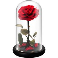 自生草 永生花玻璃罩礼盒