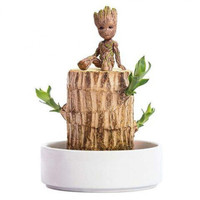 VAKADA 巴西木水培植物 直径5cm(巴西木+陶瓷托盘+格鲁特+专用液)